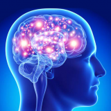 مغز و کارکرد آن